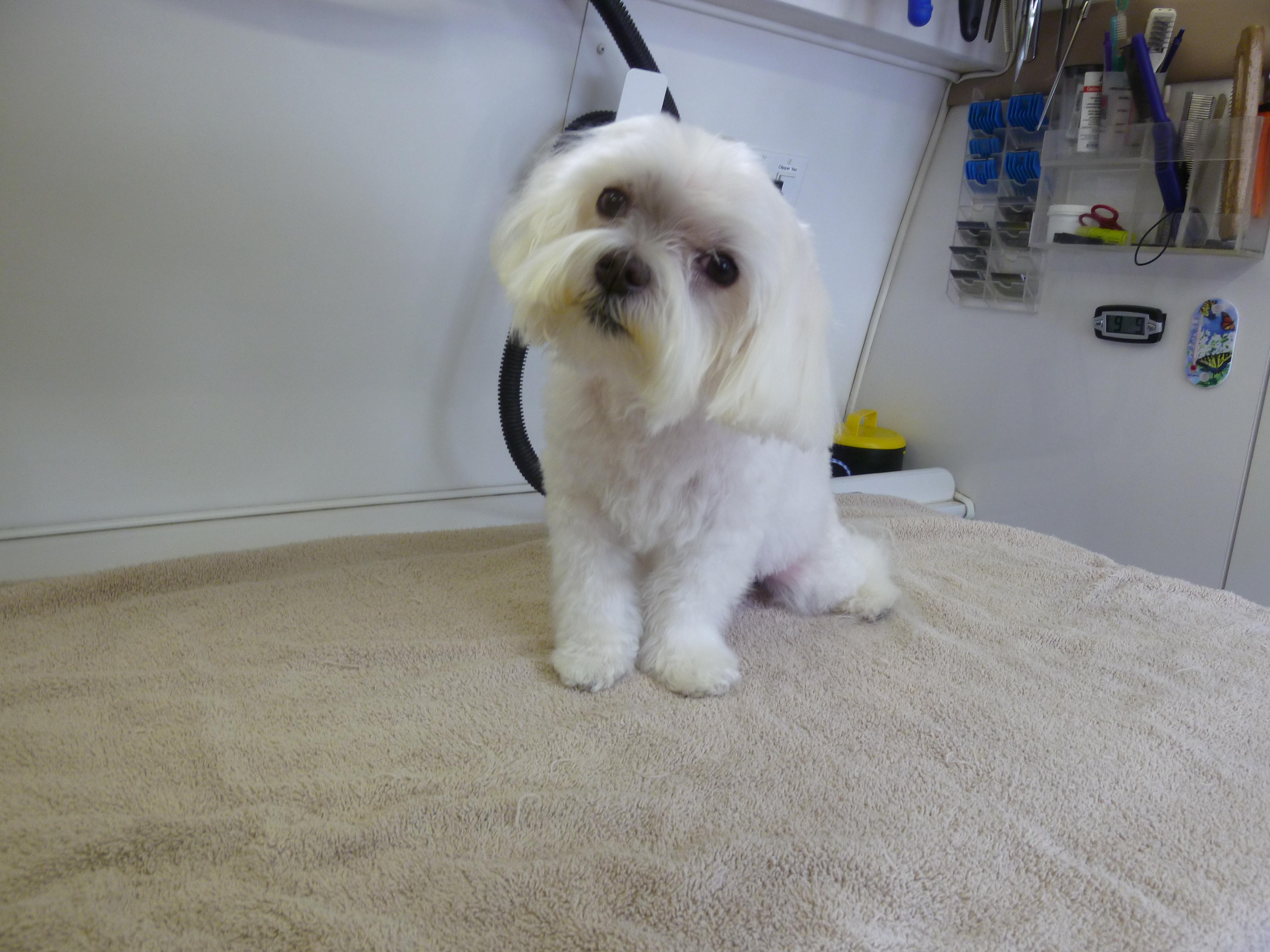 Angelas pet styling mobile grooming salon img1695 solutioingenieria Choice Image